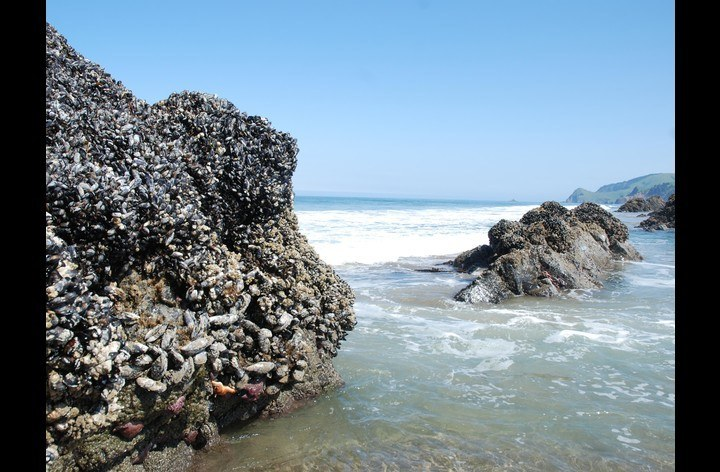 Masses of Mussels