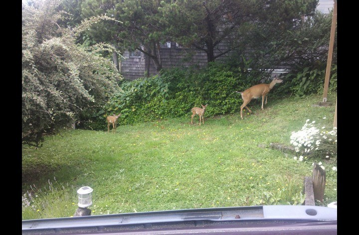 Neighborhood Residents
