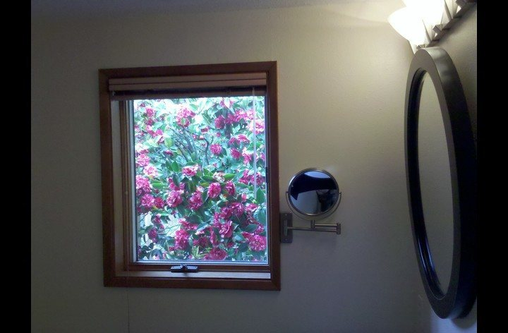 Camellias through the bathroom window.